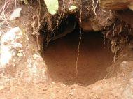 Murmeltier Höhleneingang