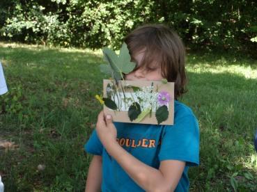 Sie heißen wilde Sommerblumenwiese