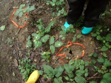 Mäuselöcher führen uns tiefer in den Wald...