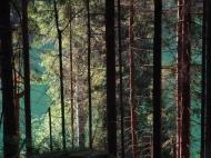 Waldesgrün im Beilatal