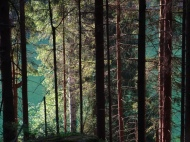 Waldesgrün im Bielatal