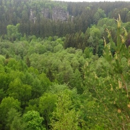 Life is green, where trees are seen :).
